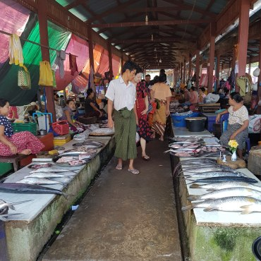 Fish being sold at a market in Dawei